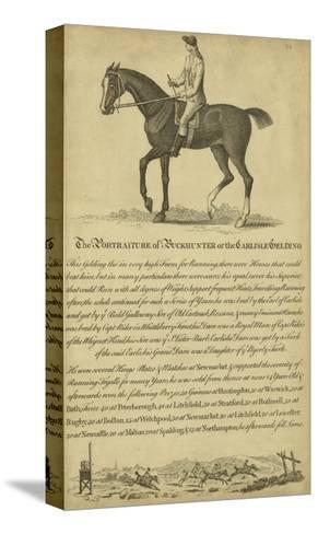 Horse Portraiture IV--Stretched Canvas Print
