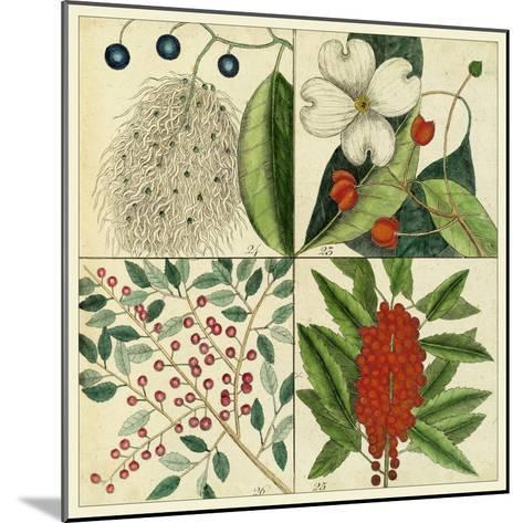 Catesby Botanical Quadrant II-Mark Catesby-Mounted Art Print