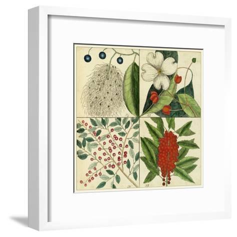 Catesby Botanical Quadrant II-Mark Catesby-Framed Art Print