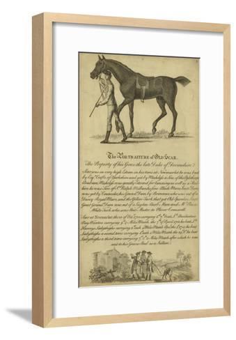 Horse Portraiture VIII--Framed Art Print