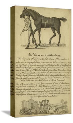 Horse Portraiture VIII--Stretched Canvas Print
