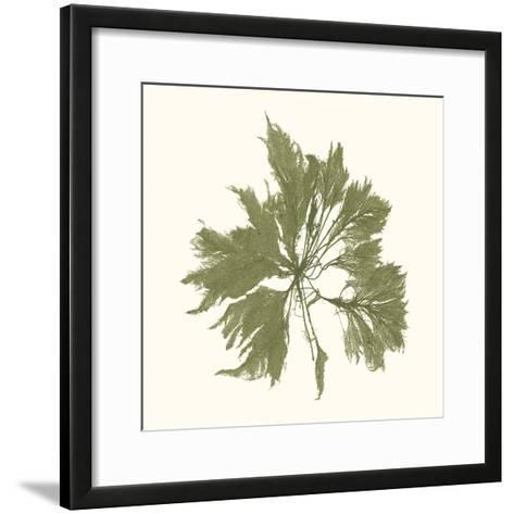 Seaweed Collection III-Vision Studio-Framed Art Print