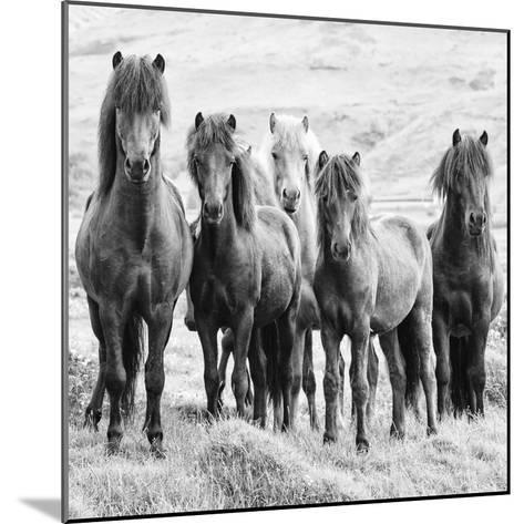 B&W Horses VIII-PHBurchett-Mounted Photographic Print