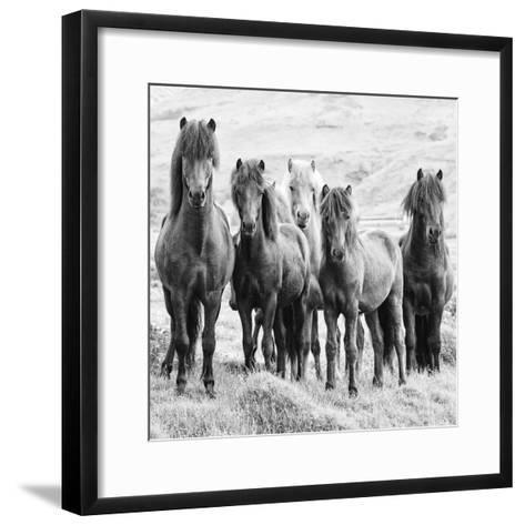 B&W Horses VIII-PHBurchett-Framed Art Print