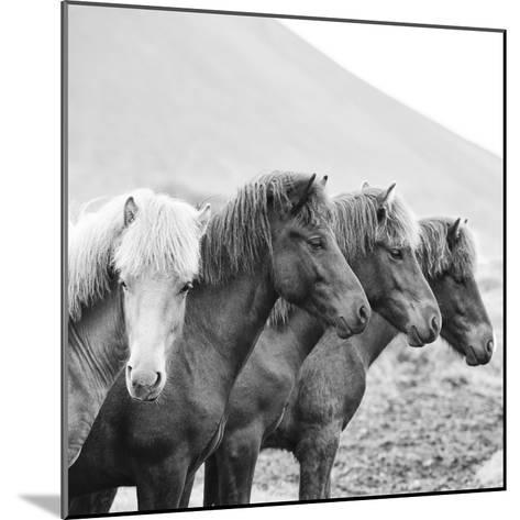 B&W Horses IX-PHBurchett-Mounted Photographic Print