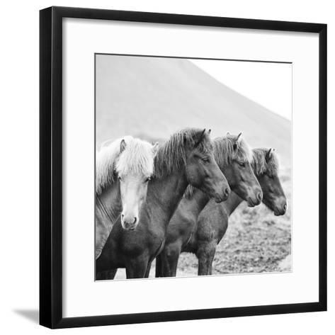 B&W Horses IX-PHBurchett-Framed Art Print