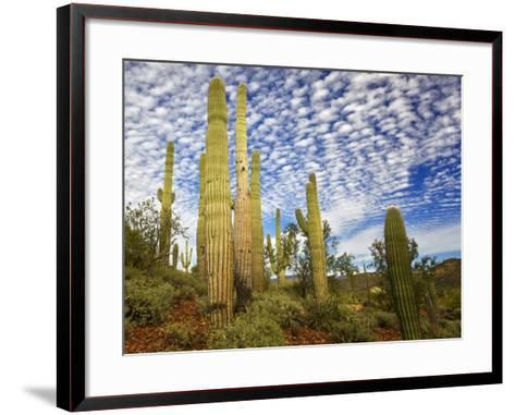 Cacti View III-David Drost-Framed Art Print