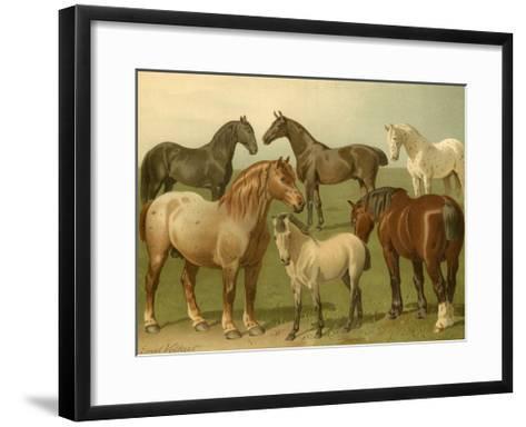 Horse Breeds II-Emil Volkers-Framed Art Print