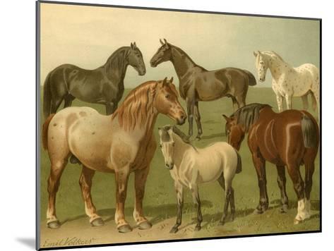 Horse Breeds II-Emil Volkers-Mounted Art Print