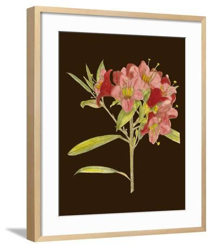 Crimson Blooms IV-Curtis-Framed Art Print