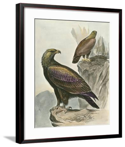Golden Eagle-F^w^ Frohawk-Framed Art Print
