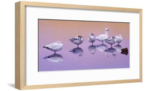 Odd Man Out-Julie Chapman-Framed Art Print