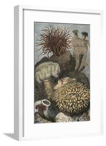 Under the Sea II-Vision Studio-Framed Art Print