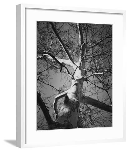 Classic Birch I-Ethan Harper-Framed Art Print