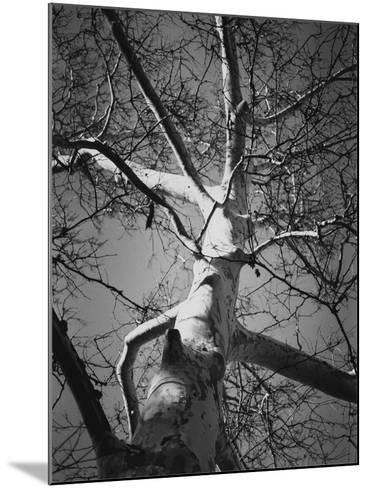 Classic Birch I-Ethan Harper-Mounted Photographic Print