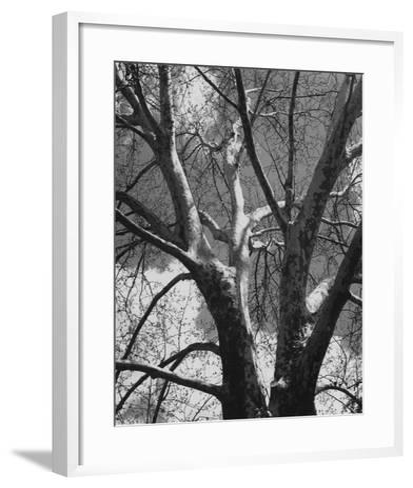Classic Birch II-Ethan Harper-Framed Art Print