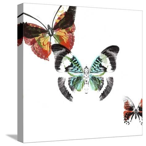 Butterflies Dance III-A. Project-Stretched Canvas Print