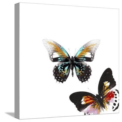 Butterflies Dance VI-A. Project-Stretched Canvas Print