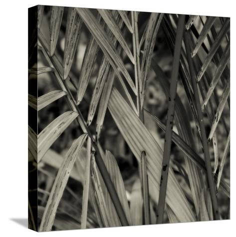 Bamboo Study II-Tang Ling-Stretched Canvas Print