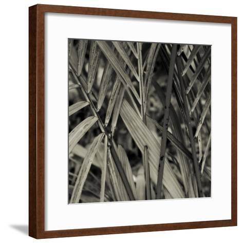 Bamboo Study II-Tang Ling-Framed Art Print