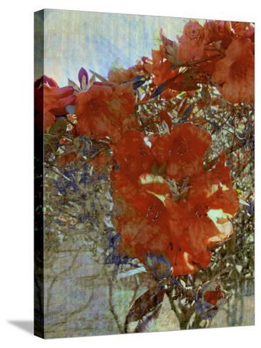 Tangled I-Danielle Harrington-Stretched Canvas Print