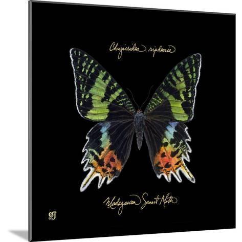 Striking Butterfly II-Ginny Joyner-Mounted Art Print