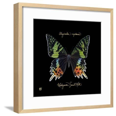 Striking Butterfly II-Ginny Joyner-Framed Art Print