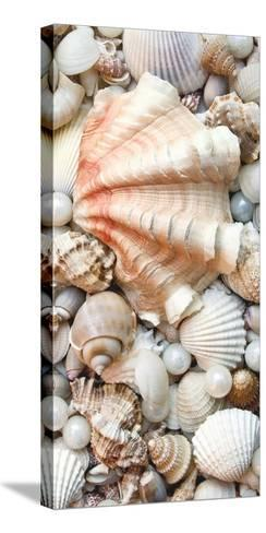 Shell Menagerie I-Rachel Perry-Stretched Canvas Print