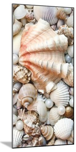 Shell Menagerie I-Rachel Perry-Mounted Photographic Print