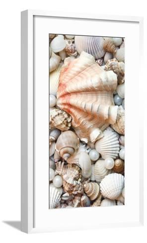Shell Menagerie I-Rachel Perry-Framed Art Print