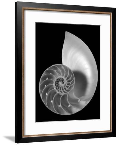 Shell II-Jim Christensen-Framed Art Print