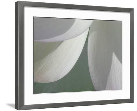 Lotus Detail I-Jim Christensen-Framed Art Print