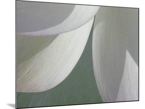Lotus Detail I-Jim Christensen-Mounted Photographic Print
