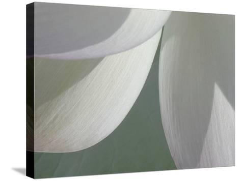 Lotus Detail I-Jim Christensen-Stretched Canvas Print