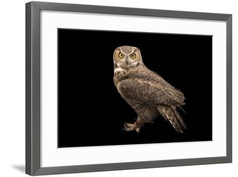 Rocky Mountains Great Horned Owl at Southwest Wildlife Conservation Center-Joel Sartore-Framed Art Print