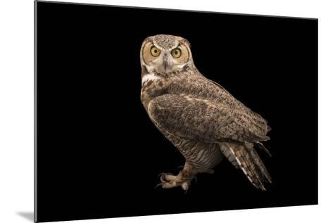 Rocky Mountains Great Horned Owl at Southwest Wildlife Conservation Center-Joel Sartore-Mounted Photographic Print