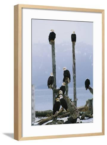 A Group of Eagles Perch on Wooden Posts-Klaus Nigge-Framed Art Print