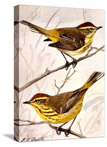 A Painting of the Palm Warbler and the Yellow Palm Warbler-Louis Agassi Fuertes-Stretched Canvas Print