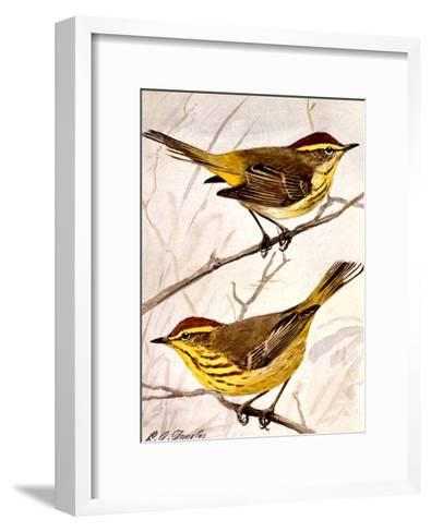 A Painting of the Palm Warbler and the Yellow Palm Warbler-Louis Agassi Fuertes-Framed Art Print