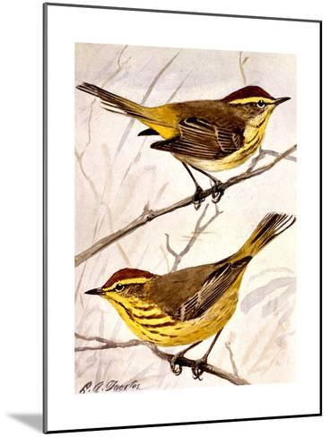 A Painting of the Palm Warbler and the Yellow Palm Warbler-Louis Agassi Fuertes-Mounted Art Print