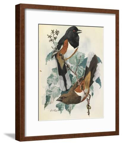 One Male and One Female Indigo Bunting Birds Perch on a Branch-Louis Agassi Fuertes-Framed Art Print