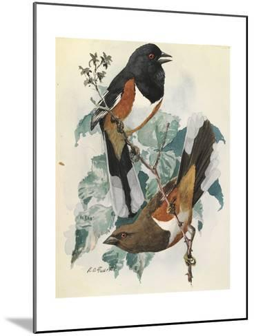 One Male and One Female Indigo Bunting Birds Perch on a Branch-Louis Agassi Fuertes-Mounted Art Print