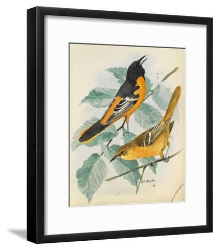 An Illustration of a Slate-Colored Junco Bird Perched in the Snow-Louis Agassi Fuertes-Framed Art Print