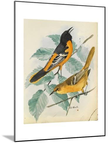 An Illustration of a Slate-Colored Junco Bird Perched in the Snow-Louis Agassi Fuertes-Mounted Art Print