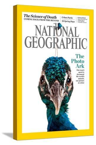 Cover of the April National Geographic Magazine-Joel Sartore-Stretched Canvas Print