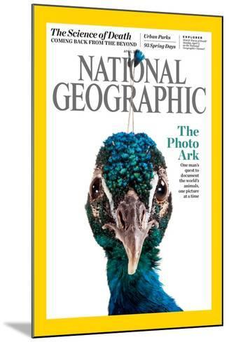 Cover of the April National Geographic Magazine-Joel Sartore-Mounted Photographic Print