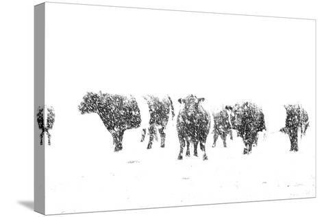 Oreos and Milk II-Aledanda-Stretched Canvas Print
