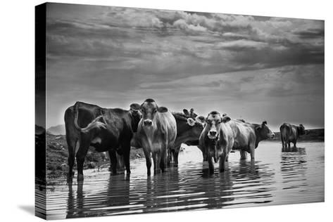 In the River-Aledanda-Stretched Canvas Print