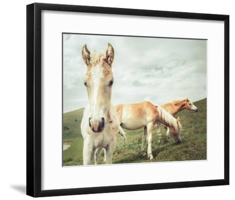 Three Buddies-Aledanda-Framed Art Print