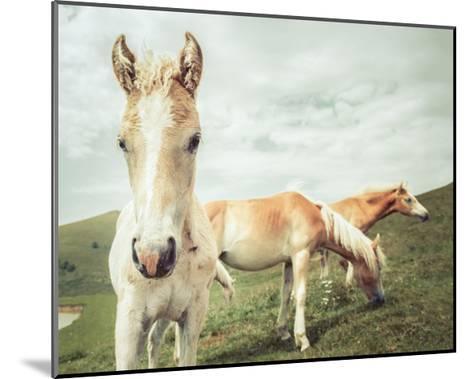 Three Buddies-Aledanda-Mounted Art Print